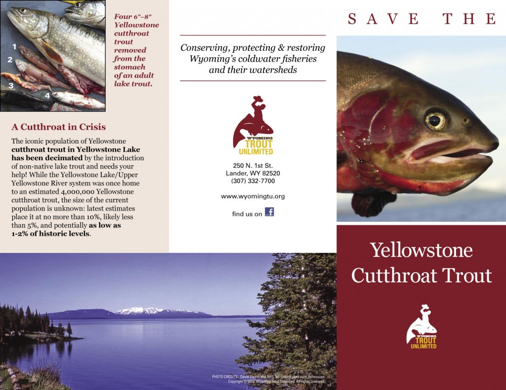 Wyoming Trout Unlimited Brochure Design